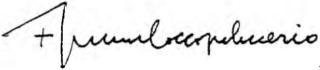 coccopalmerio-firma